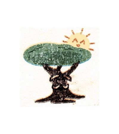 P Tree Barber
